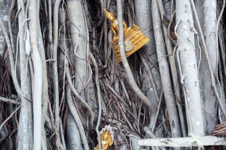 bouddha: image de bouddha abandonn� dans l'arbre Banque d'images