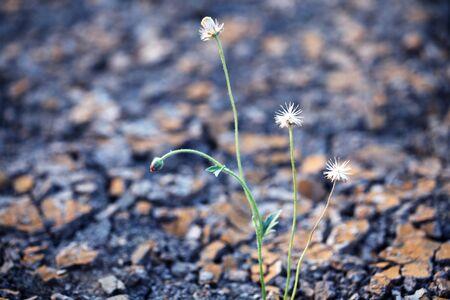 canne: erba canne sulla terra ferma Archivio Fotografico