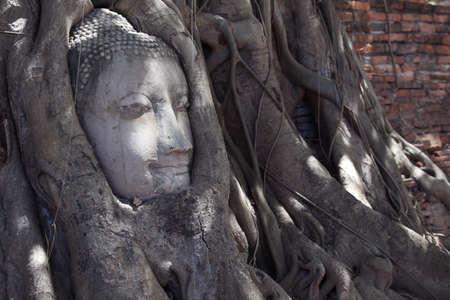 cabeza de buda: cabeza de Buda en la raíz del árbol