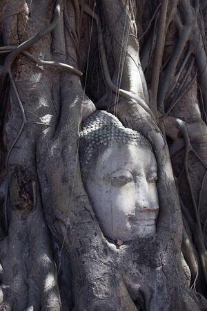 cabeza de buda: abstracta de la cabeza de Buda en el �rbol grande