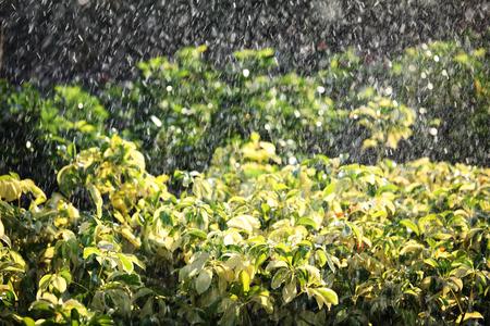 watering plant: watering plant