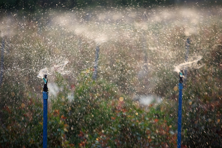 water sprinkler: water sprinkler
