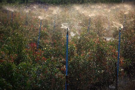 water sprinkler: water sprinkler background. Stock Photo