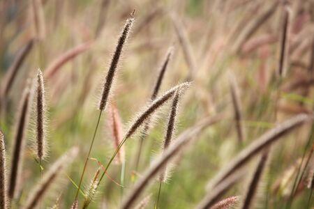 ance: canne sfondo di erba