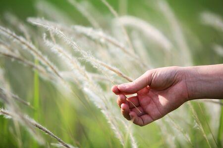 canne: mano erba toccando canne