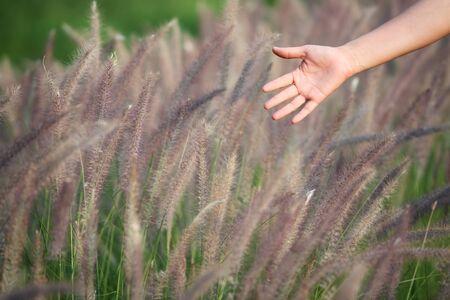 ance: mano canne toccando fondo in erba.