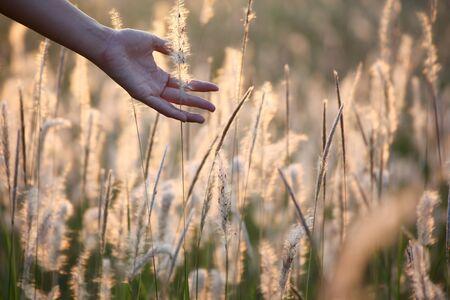 ance: mano erba toccando canne
