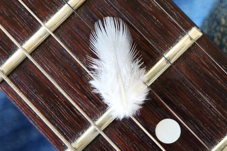 fingerboard: feather on guitar fingerboard Stock Photo