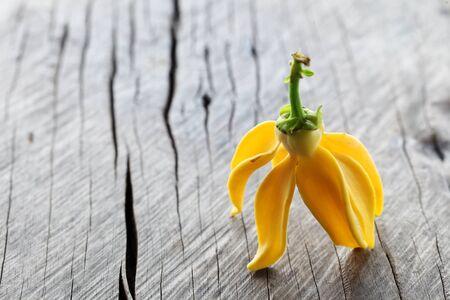 ylang ylan flower on grunge wooden panel as background. Standard-Bild