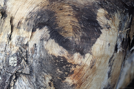 texture bois comme arrière-plan.