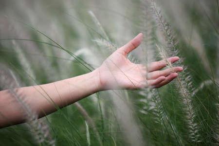 ance: hand touching reeds grass