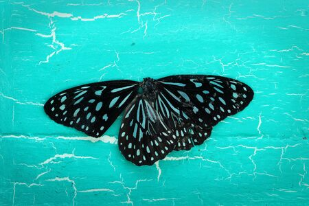 butterfly background: colorful butterfly on grunge background. Stock Photo