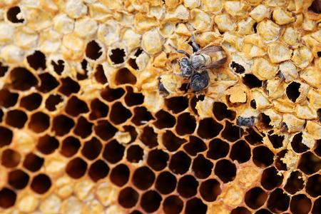 honey comb background. Stock Photo