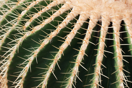thorn: cactus thorn pattern Stock Photo