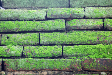 ancient brick wall: moss on ancient brick wall Stock Photo
