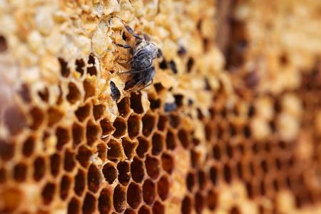 honey comb: honey comb background. Stock Photo