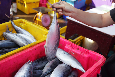 pattani thailand: hand showing fresh longtail tuna in fish market