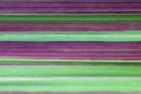 blade of grass: colorful stripe of blade grass