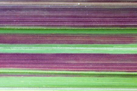 stripe: colorful stripe of blade grass