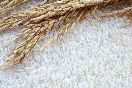 polished: background of ear of paddy on white polished rice grain. Stock Photo