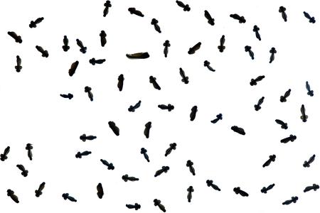 embrio of tadpole isolated on white background.