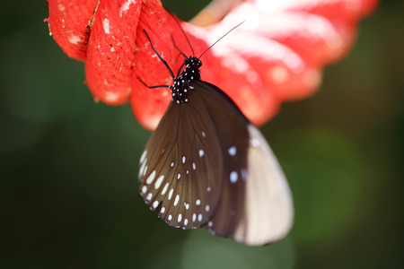black textured background: close up of beautiful butterfly catching on rope