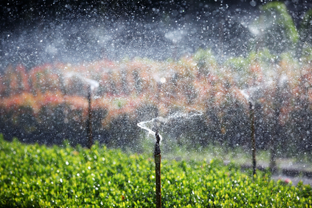 landscape of water sprinkler background.
