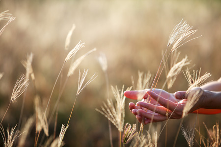 hands on dry reeds grass background. Imagens