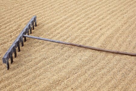 tradition wooden harrow on rice seed ground