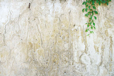 weathered white wall with green plant