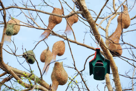 bird nest and birdhouse on the tree against blue sky