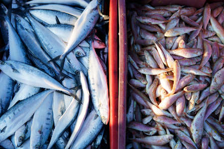 fish freshly caught showing in pattani grocery market,Thailand.
