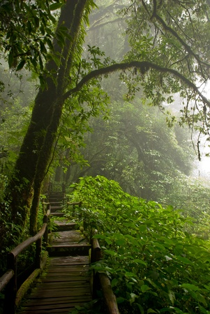 Doi Inthanon are rainforest in Thailand photo