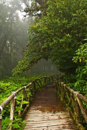 Rainforest Doi Inthanon  in Thailand Stock Photo