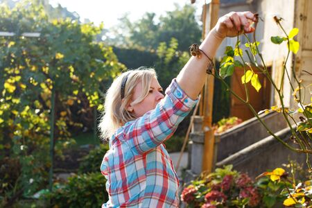 backyard woman: Woman cleaning leaves from branch, outdoor works at backyard