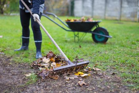 Gardener raking leaves on soil at autumn, outdoors