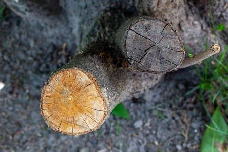 Deforestation of trees, branch stump cross-section, top view 版權商用圖片