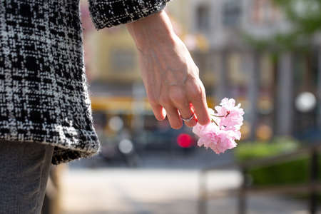 Old womans hand holding cherry blossom, remember on love, metaphor 版權商用圖片