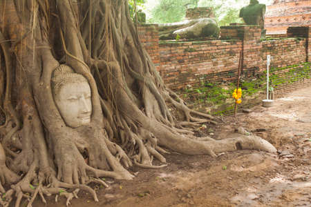Buddha head in tree roots.Ayutthaya historical park, Thailand. Stock Photo - 14996308