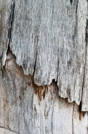 Old wood. Decay due to the feeding of termites. photo