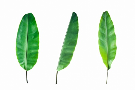 Fresh Banana Leaf Isolated on white background Banco de Imagens