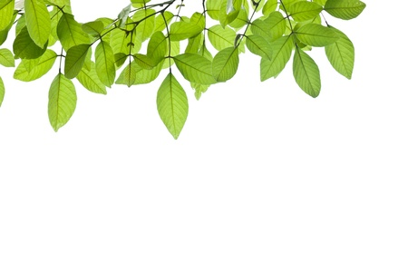 spring green leaf background