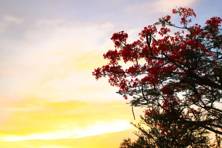Peacock flowers on evening sky.Colorful evening sky. photo