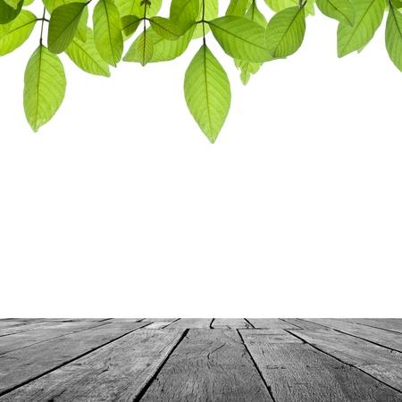 hout en blad op witte backgrond.