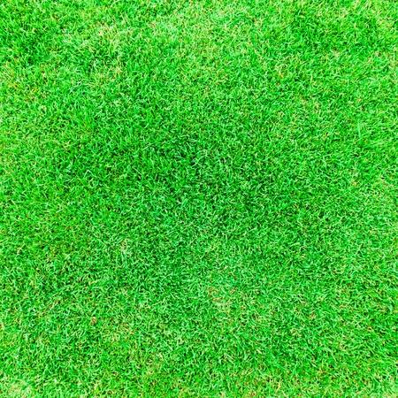 Grass background. Green grass on a football field. photo