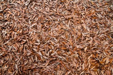 dead leaves: Hojas muertas fondos y texturas