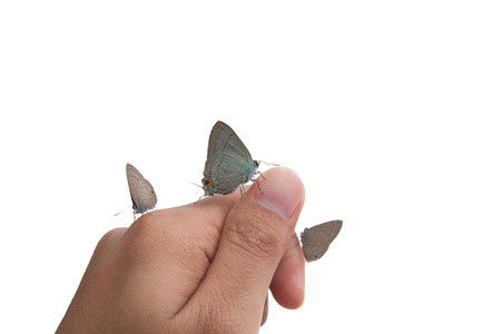 butterfly on  hand isolated on white photo