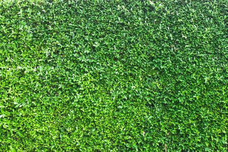 assort: green leaf background or texture.