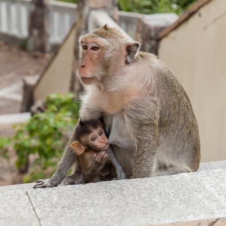monkey family photo
