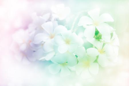 petites fleurs: fleur de fond, Banque d'images